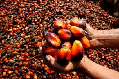 Aguas divididas por el aceite de palma