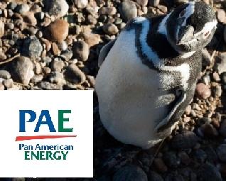PAE busca preservar las aves argentinas en peligro de extinción
