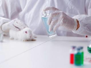 Europa llama a una prohibición global contra el testeo animal en cosméticos
