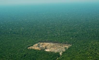 Francia apunta a prohibir las importaciones producto de la deforestación al 2030