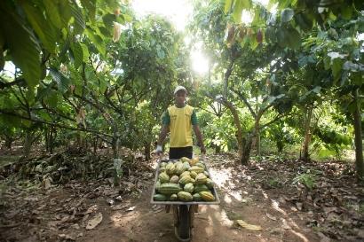 Cocoa Life abastecerá todo el cacao de Mondelēz International en 2025