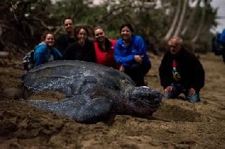Subway llama a salvar a las tortugas marinas y a los océanos