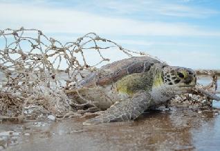 Los plásticos copan las playas bonaerenses